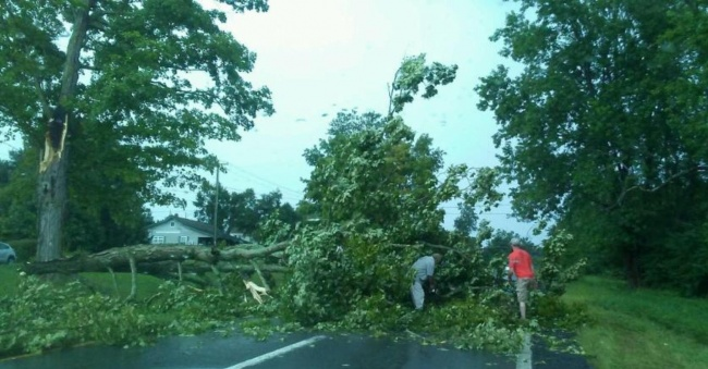 Storms cause heavy rains, downed trees
